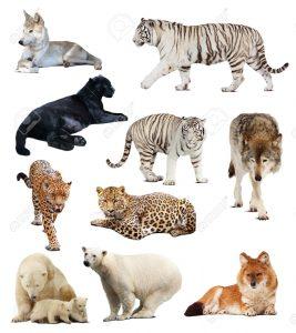 animales carnívoros2