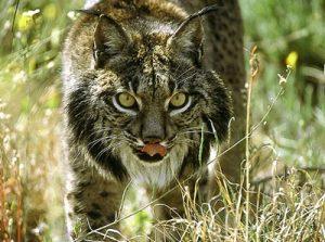 animales - en - peligro - de - extinción 2