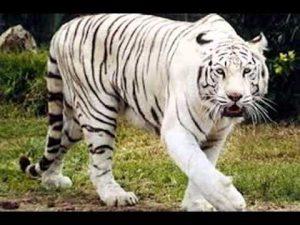 animales - en - peligro - de - extinción 3