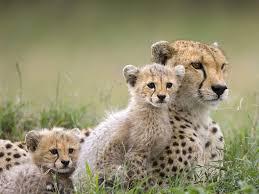 animales - en - peligro - de - extinción 4