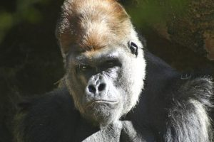 animales - en - peligro - de - extinción 6