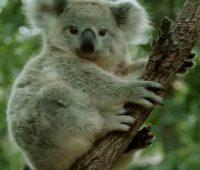 13 Imágenes de animales en peligro de extinción