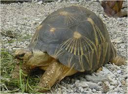 animales - en - peligro - de - extinción tortuga