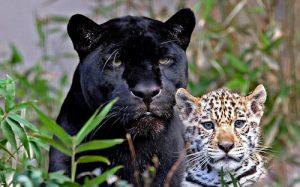 animales-feroces 2