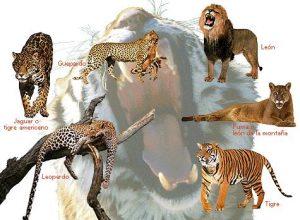 animales-feroces 5