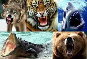 animales-feroces 6