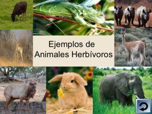 animales-herbívoros 2