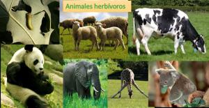 animales-herbívoros 3