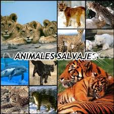 animales-salvajes 2
