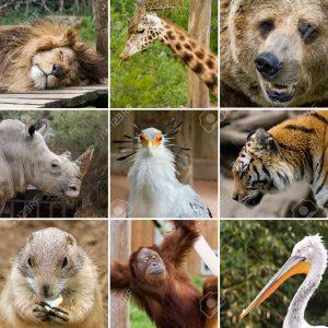 animales-salvajes 3