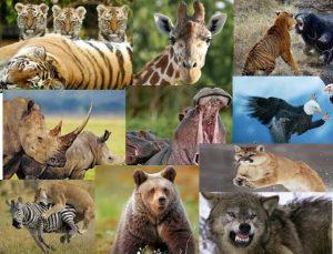 animales-salvajes