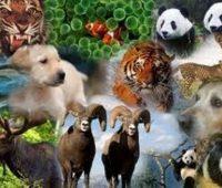 Imágenes de animales salvajes