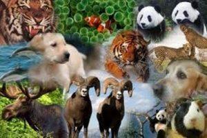 animales-salvajes 4