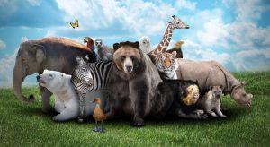 animales-salvajes 6