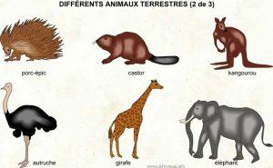 animales - terrestres