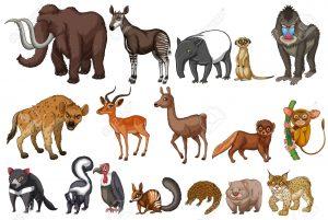 animales - terrestres 3