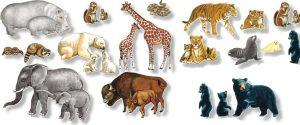 animales - terrestres 4