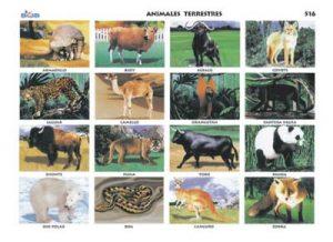 animales - terrestres 5