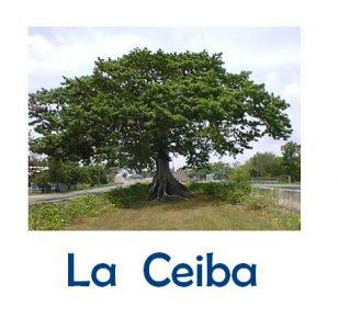 ceiba12
