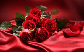 rosas-para-regalar 2