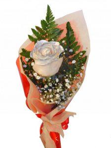 rosas-para-regalar 4