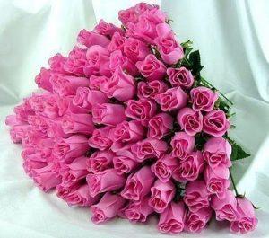 rosas-para-regalar 6