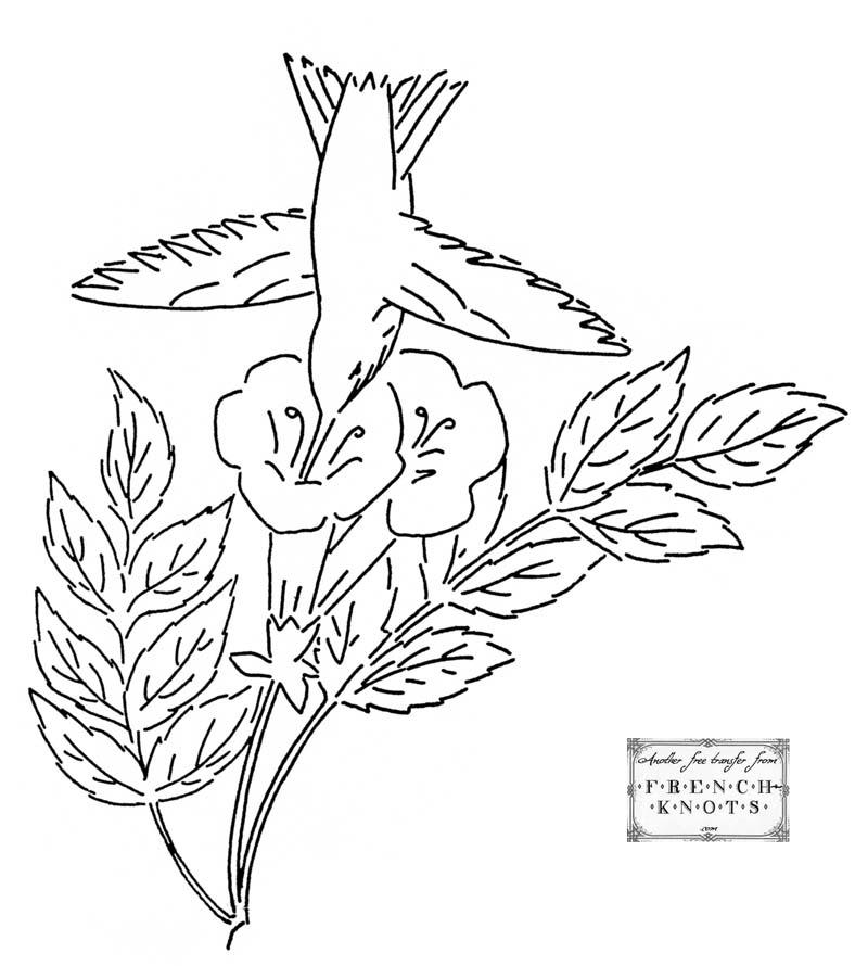 Imágenes del colibrí para colorear | Descargar imágenes gratis