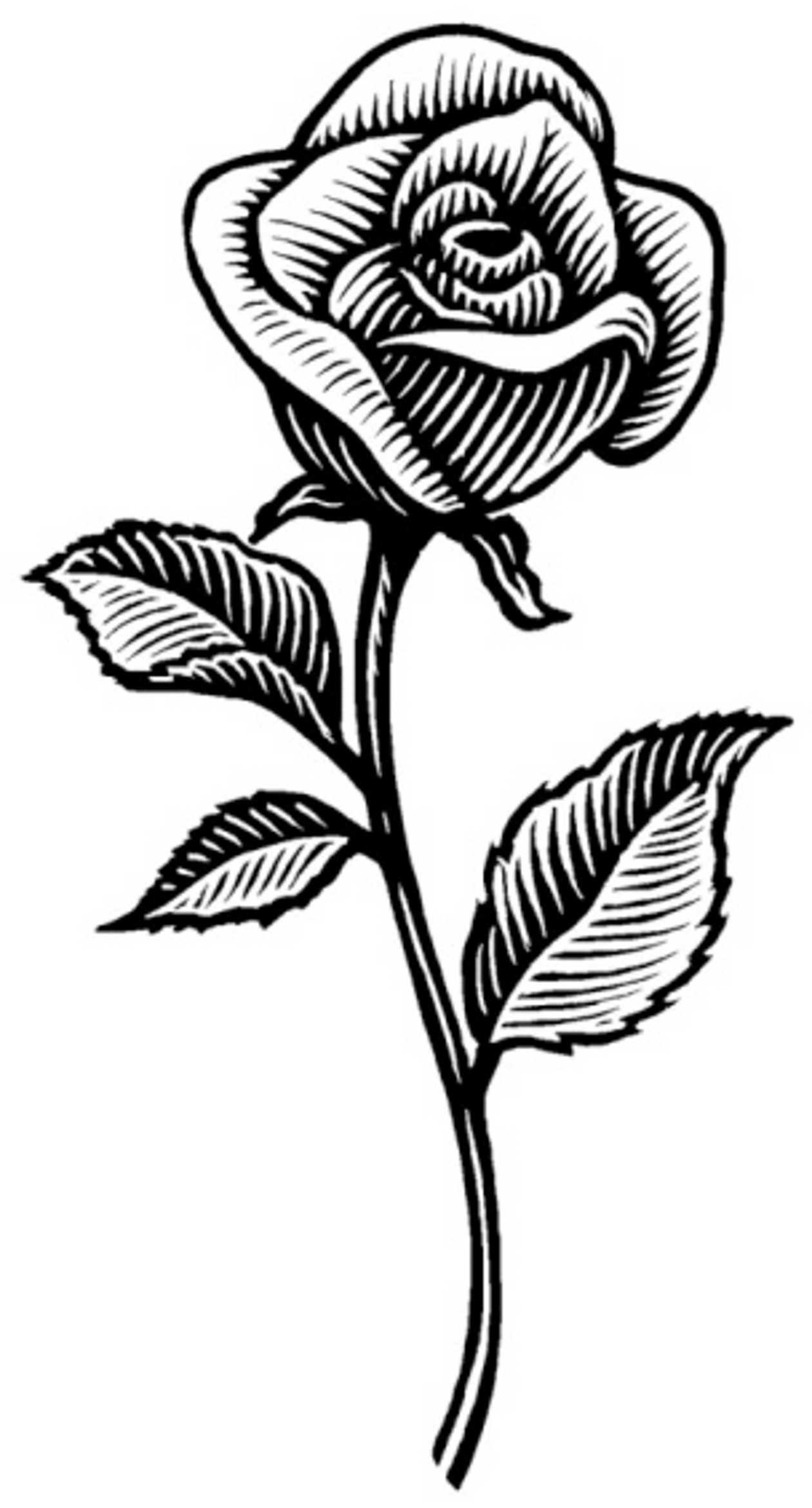 Imágenes de rosas para dibujar | Descargar imágenes gratis