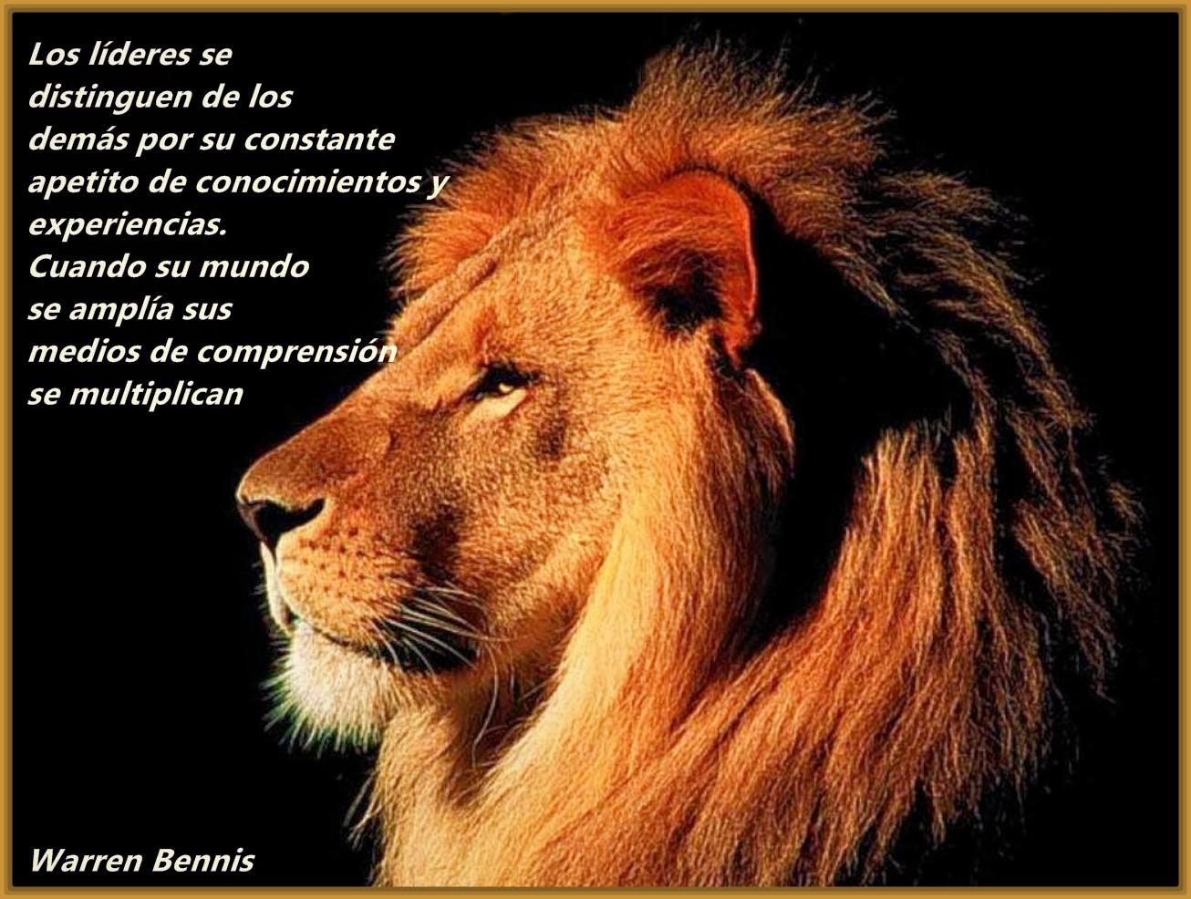 imagenes-de-leones-con-frases-bonitas