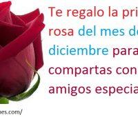 Imagenes de te regalo la primera rosa del mes de diciembre