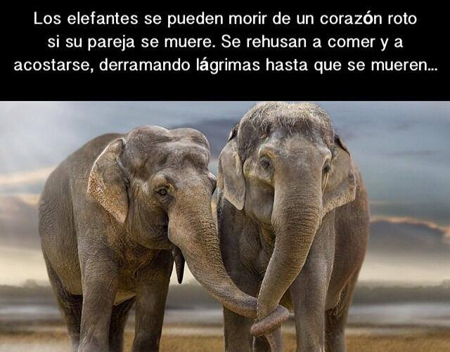 tiernas-imagenes-de-amor-entre-elefantes-3