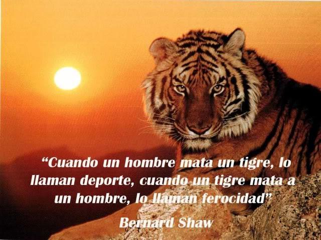 tigreshaw
