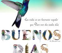 Imágenes de el colibrí con frases de buenos días
