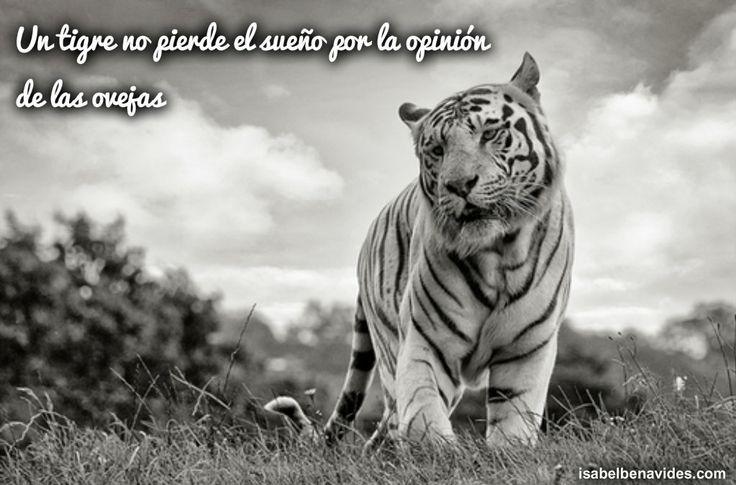 Imágenes De Tigres Con Frases Descargar Imágenes Gratis