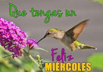 colibrí-feliz-miercoles-mensaje-para-compartir-en-facebook-3