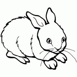 colorear-animales-conejos-dibujos-infantiles
