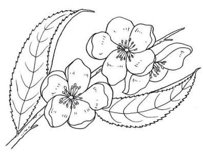dibujo-de-flores-de-primavera-para-colorear
