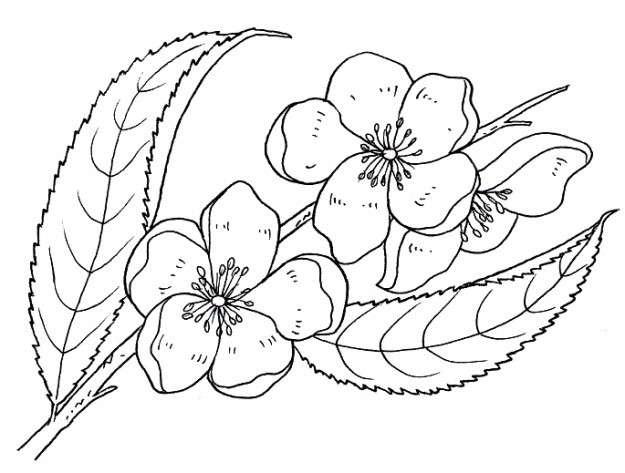 Imágenes De Rosas Para Dibujar Descargar Imágenes Gratis