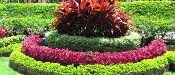 Imagenes de diseños de jardines