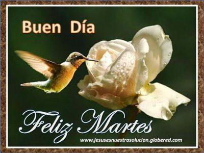 feliz-martes-colibri