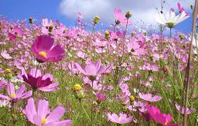 flores-silvestres-1