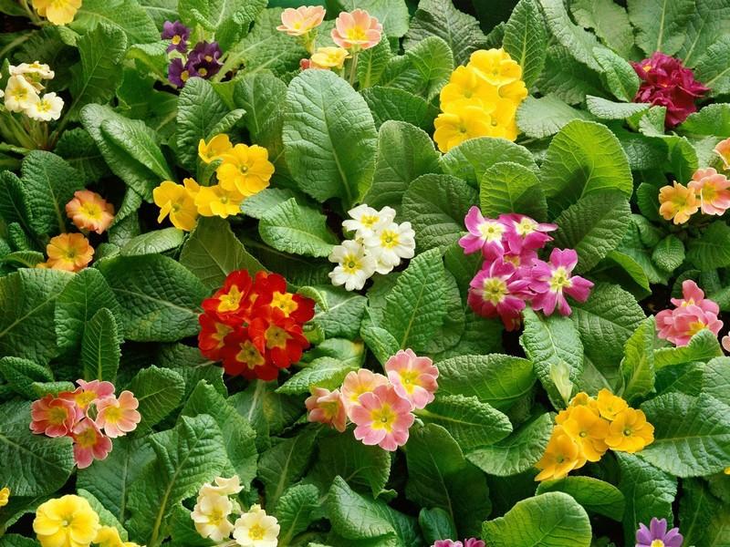 flores-silvestres-10