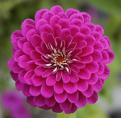 flores-silvestres-13