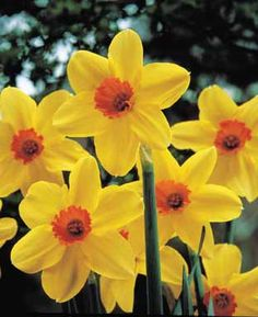 flores-silvestres-14