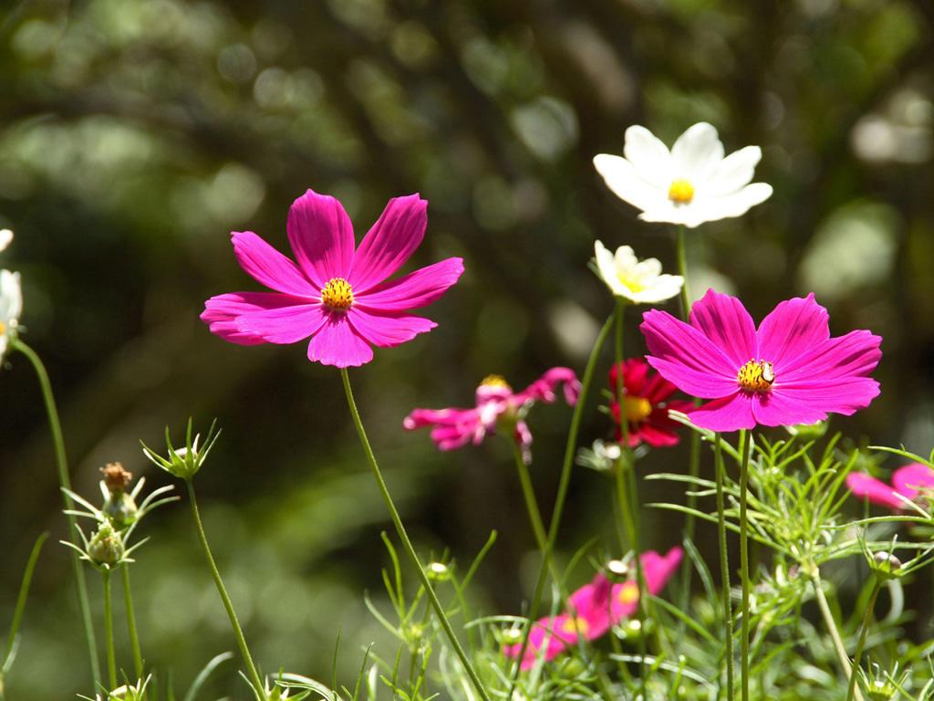 flores-silvestres-3