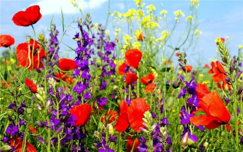 flores-silvestres-5