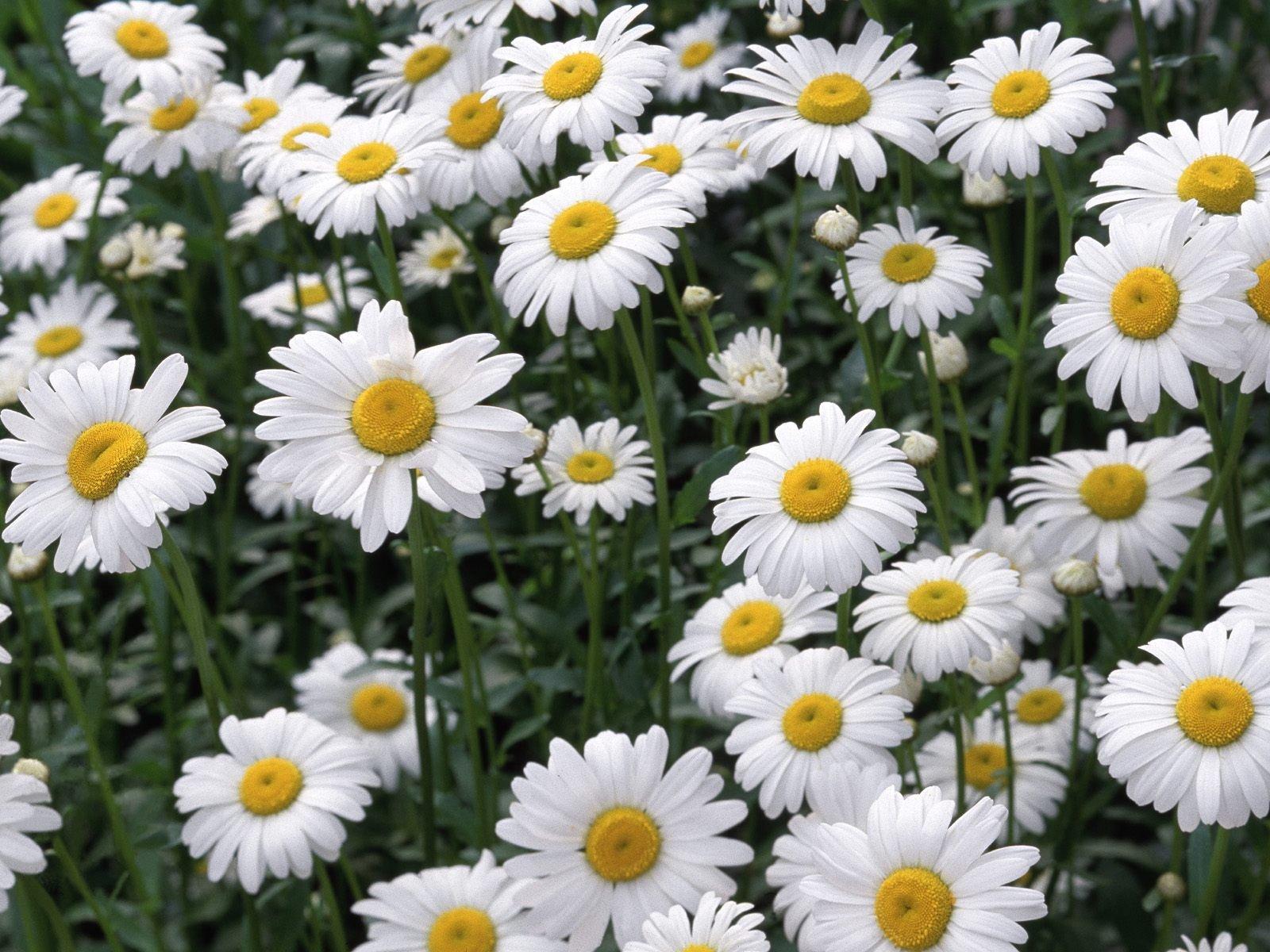 flores-silvestres-6