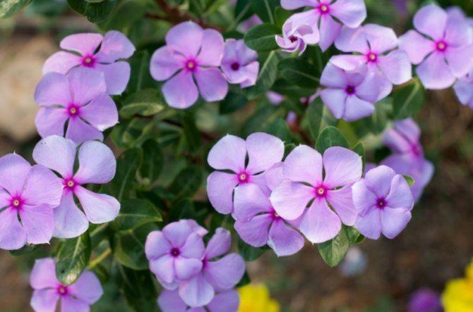flores-silvestres-9