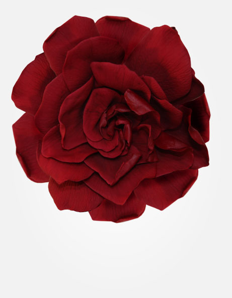 gardenias-de-colores