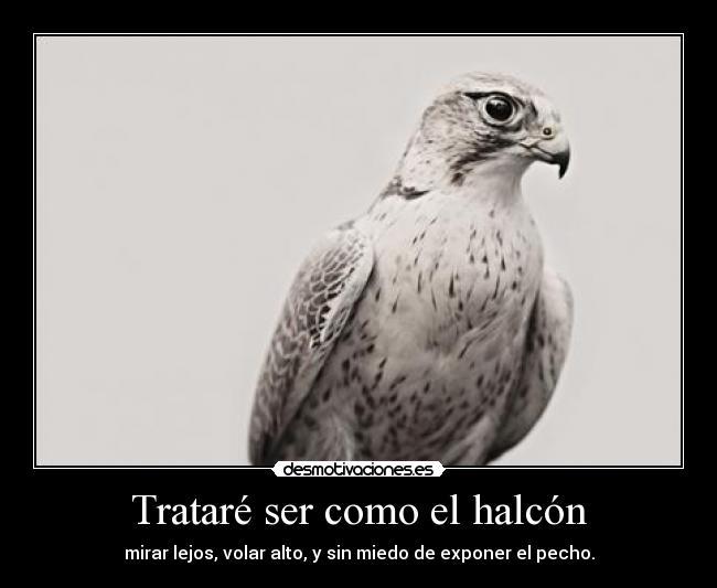 halcon